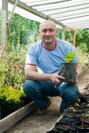 horticulturist: farmer is sitting with a pot of seedlings in the greenhouse Stock Photo