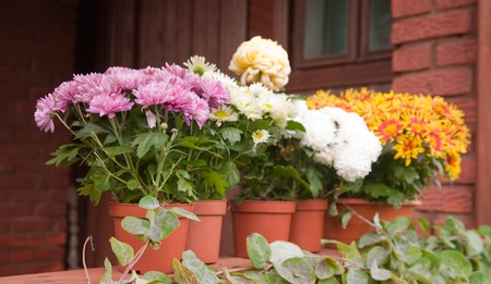 colorful flowers in pots standing on the porch photo