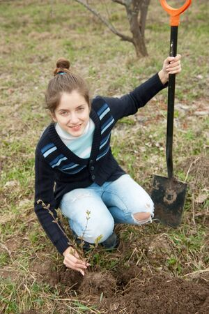 female farmer  planting  sprouts shrubbery in orchard  photo