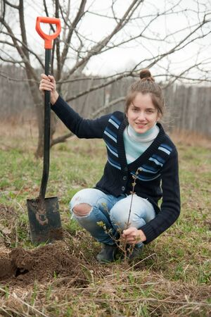 Famale farmer  planting  sprouts shrubbery in orchard  photo