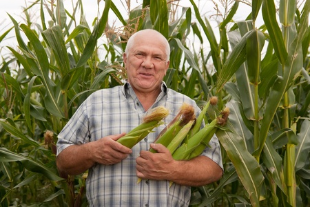 Senior man on  field corn with corn ears photo