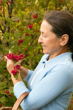 guelder: woman aged near guelder rose bush