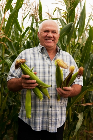 Senior man in corn field photo
