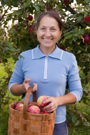 woman in garden  picking apples. Stock Photo