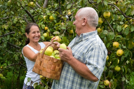 Happy mature  man and woman in apple garden. photo