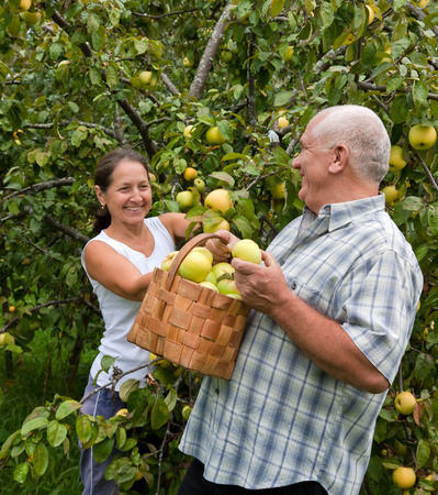 Happy mature  man and woman in apple garden
