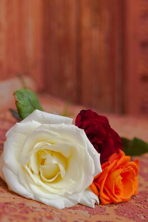 bouquet of colorful roses on orange background Stock Photo
