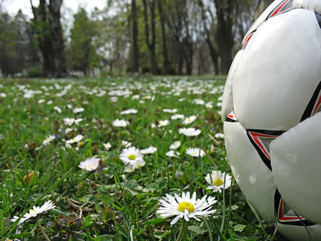 ball amongst dandelions in the city park photo