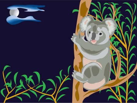 EUCALYPTUS: koala bear on a eucalyptus tree in the night Illustration