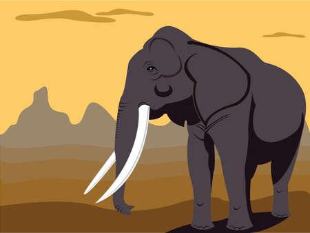elephant bull Illustration