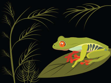 jungle vector: red eyed tree frog Illustration