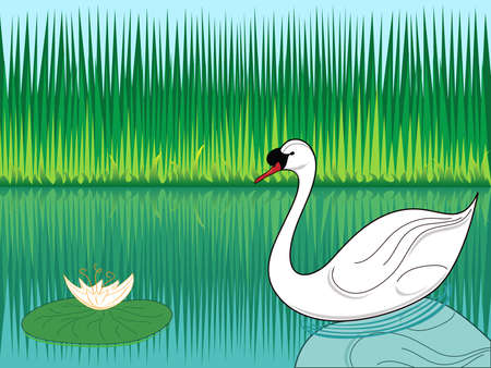 white swan swimming in a lake Vector