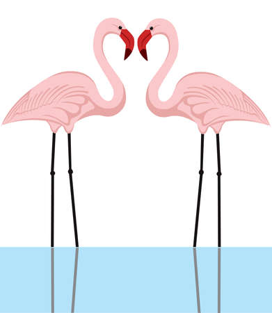 freshwater bird: illustration of a couple of pink flamingos in a lake