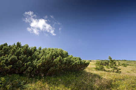 Mountain hill top with pine trees and dwarf pines