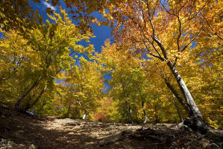 Beautiful landscape of colorful sunlit autumn forest