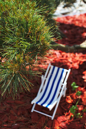 A striped beach chair for sunbathing and relaxing is standing in the shade under a bonsai tree on a hot sunny day, sawdust and red tree bark are lying on the ground with blurred backgraund Banque d'images - 125336095
