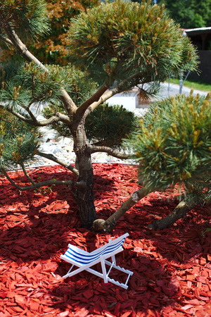 A striped beach chair for sunbathing and relaxing is standing in the shade under a bonsai on a hot sunny day, sawdust and red tree bark are lying on the ground vertically Banque d'images - 125336225