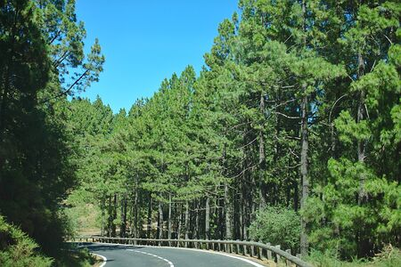 The road in the pine forest, sunny day, trip by car in nature