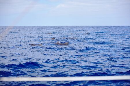 Family of whales, dolphins in the sea, ocean, yacht observation trip Banque d'images - 125337964