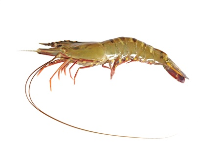 prepared shrimp:  Tiger Prawn,shrimp seafood isolated on white Stock Photo