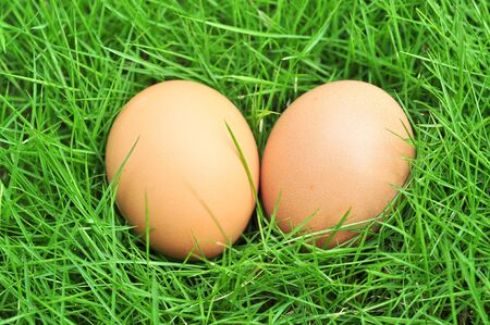brown eggs on green grass photo