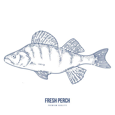 Ink sketch of perch