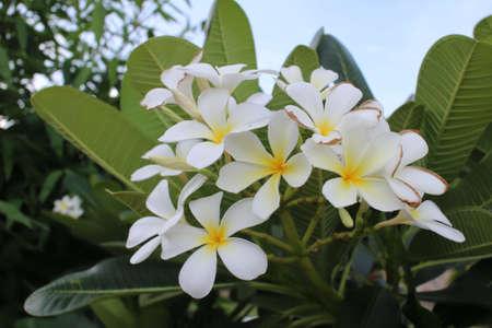 colour: Flower