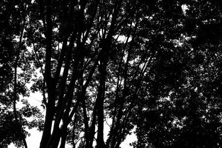 background: Tree background