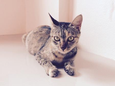 eye: Kitten cat Stock Photo