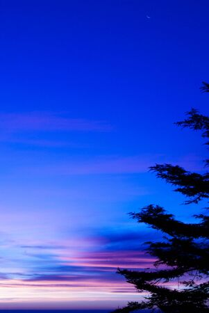 view from behind: suggestive and colorful sunrise view from behind the vegetation Stock Photo