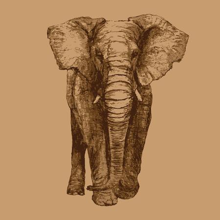 elefante: Elefante africano, Vista frontal, dibujo artístico Vectores