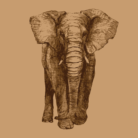 African Elephant, Front view, Artistic sketch
