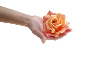 kept: orange flower kept in a hand isolated on the white background Stock Photo