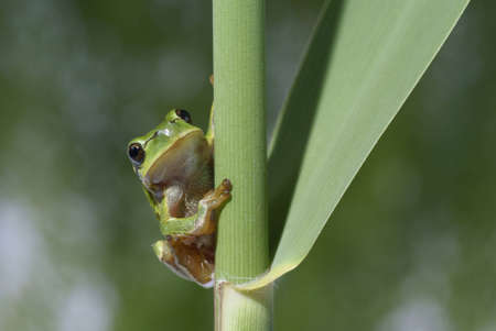 green frog sitting on reed in forest photo