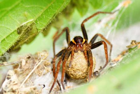 big frightening spider on spiderweb