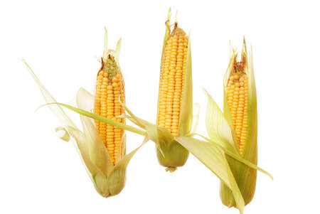 three raw ripe corn on white background photo
