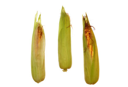 three big and raw corn on white background photo