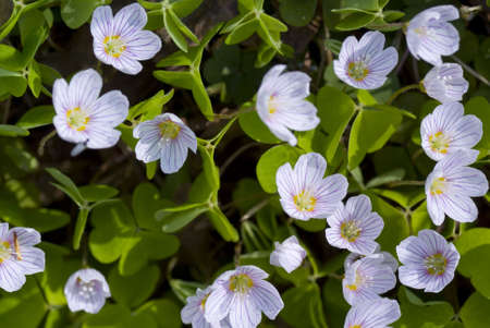 small flower grows in forest on background Stock Photo - 6841171