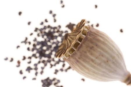 dry poppy seed and empty head poppy seed Stock Photo - 8016751