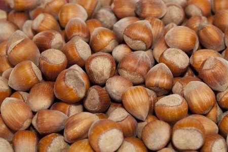 nutshell: fresh hazelnut in nutshell as background