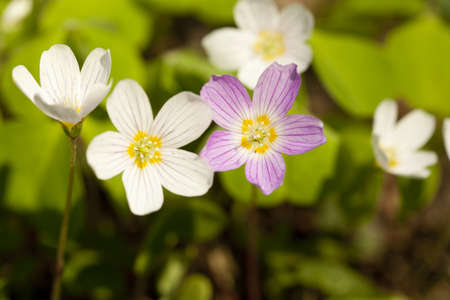 small flower grows in forest on background Stock Photo - 12728839