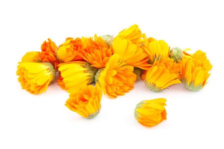 inflorescence: fresh orange inflorescence (Calendula officinalis) on white Stock Photo