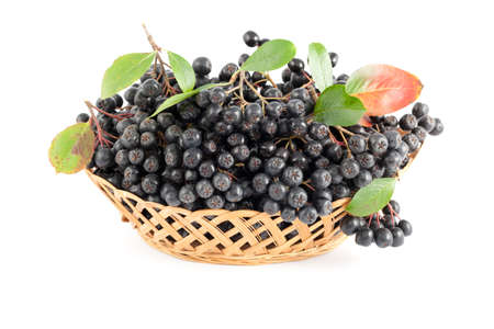 cluster black aronia in basket on white  background
