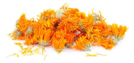 inflorescence: dry orange inflorescence (Calendula officinalis) on white