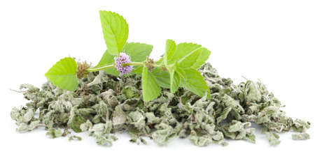 arvensis: fresh and dry spearmint on white background