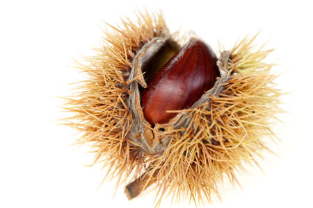 sweet chestnuts inside opening on white background Stock Photo