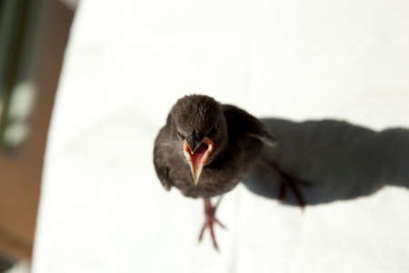 warms: young starling stands on stool and warms oneself