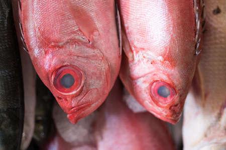 Fresh Catch of Fish at the Market Фото со стока