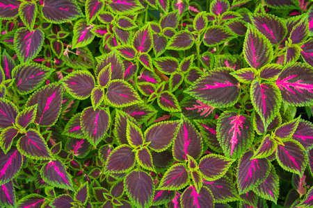 Green and Purple Leaf Background Texture