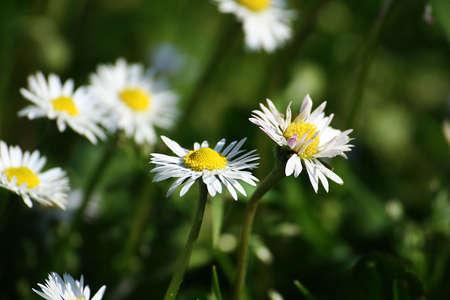 spontaneous: spontaneous spring flowers